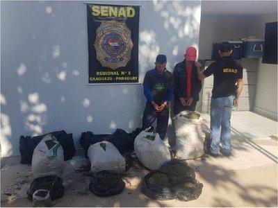 Dos aprehendidos con 53 kilos de marihuana en Caaguazú