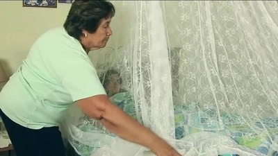Activan plan de contingencia ante posible epidemia de dengue en el país