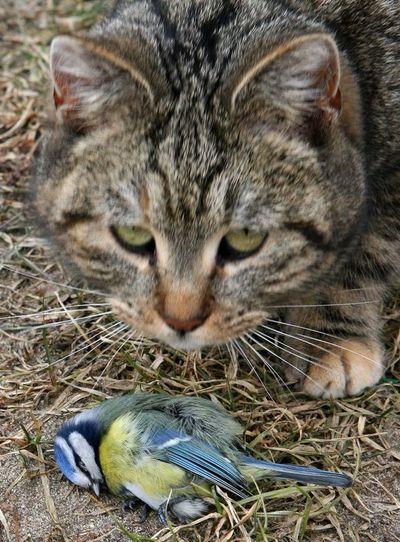 ¿Pueden prohibir por ley que un gato salga de su casa?