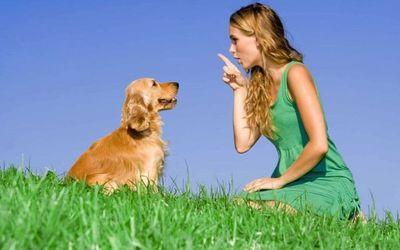 """Los perros """"saben"""" las palabras que les dicen"""