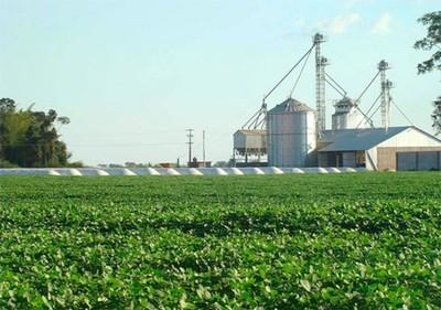 Mal año y pronóstico poco alentador para el rubro de cereales y oleaginosas