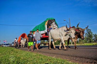 Denuncian maltrato animal contra bueyes en Caacupé