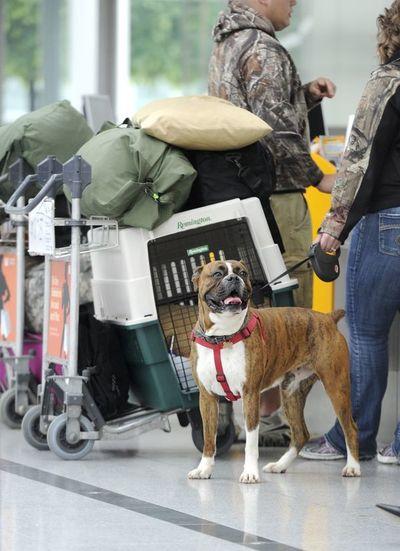 ¿Viaja con su perro? Algunas cosas a tener en cuenta