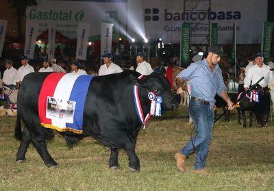 Un toro brangus paraguayo es el nuevo campeón del mundo