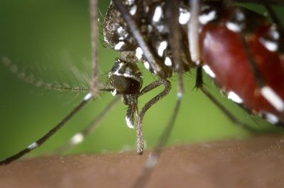 Advierten que epidemia de dengue será 5 veces mayor que la anterior