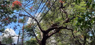 Murió electrocutado intentando podar un árbol