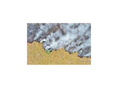 Deforestación en  Amazonia subió el 104% en noviembre