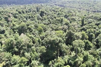 Infona avanza en formación de técnicos forestales y elaboración de protocolos ante incendios
