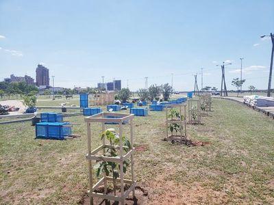 Plantaron un total de 100 árboles en la Costanera de Asunción