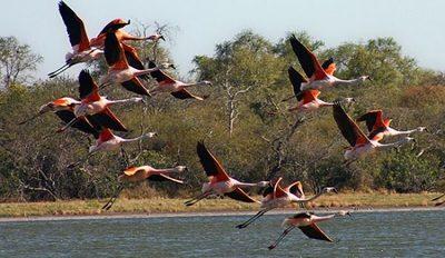 Paraguay será sede de Feria de Aves de Sudamérica