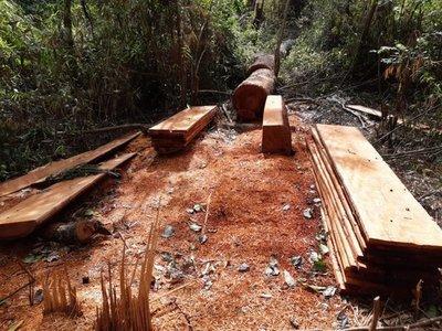 Denuncian tala ilegal de árboles en Marina Cué