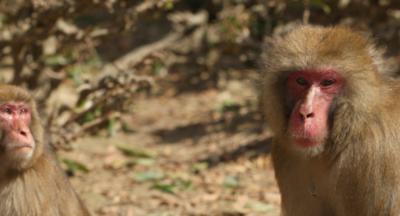 Incendio se cobró la vida de varios monos en Alemania