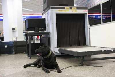 'Rocky' ayuda a incautar cerca de 8 kilos de cocaína en Aeropuerto Silvio Pettirossi.