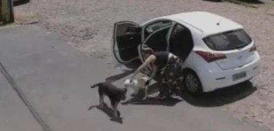 ¡Inhumano! Abandonó a un perrito que le faltaban las patitas