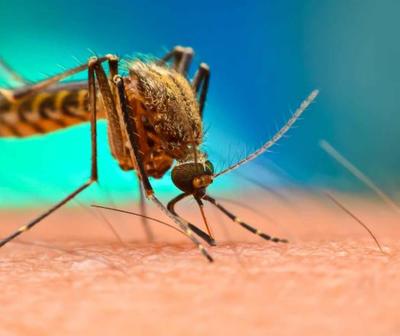 Muere primera víctima de dengue en Filadelfia