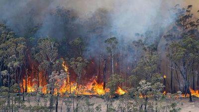 Afirman que hay 24 detenidos por los incendios en Australia