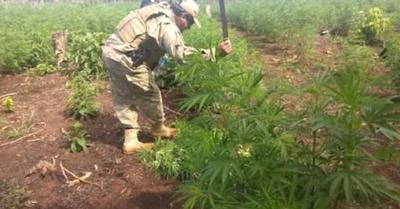 Narcos pierden dineral en la guerra antidroga