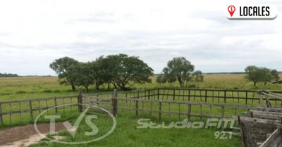 Desaparecen 30 vacas de un establecimiento en General Delgado