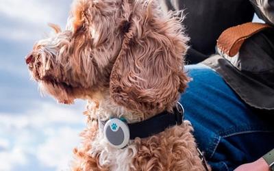 Dispositivo para medir el ánimo y el estado de salud de tu perro