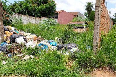 Insecticidas y repelentes no son suficientes sin la eliminación de criaderos