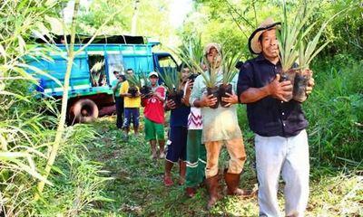 INDI impulsará proyectos productivos con familias indígenas