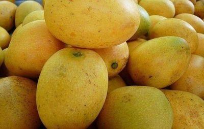 Buscan donantes de mangos