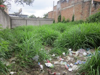 Directora de Senepa considera más apropiado declarar emergencia ambiental por dengue
