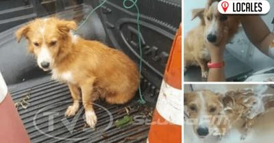 Perro que fue arrastrado por su dueño ya fue rescatado