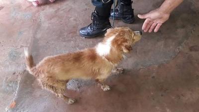HOY / Ató a un perro por su motocicleta y lo arrastró por kilómetros: Fiscalía actúa y lo imputa