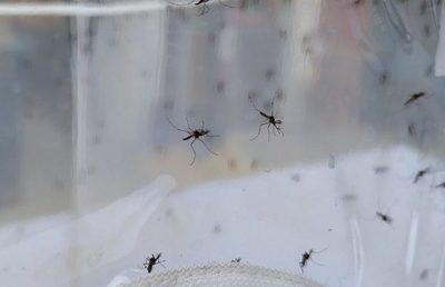 Senepa: funcionamiento de laboratorio no tiene trascendencia con la epidemia instalada
