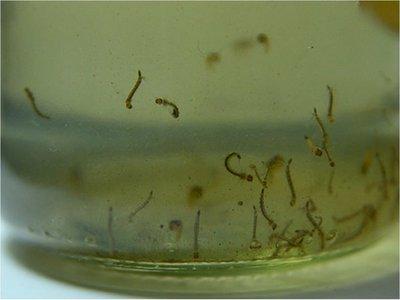 Salud confirma segunda muerte por dengue en lo que va del año