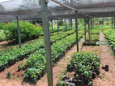 Escuela Agrícola desea instalar un vivero con arboles nativos del Chaco