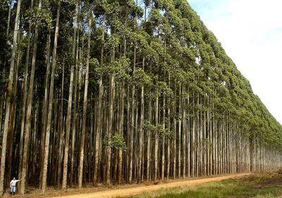 Sector de la madera reclama mayor trabajo en marca país