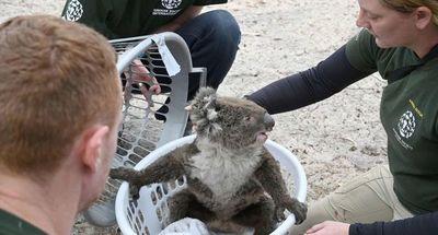 Incendios en Australia amenazan futuro de 327 especies de animales y plantas