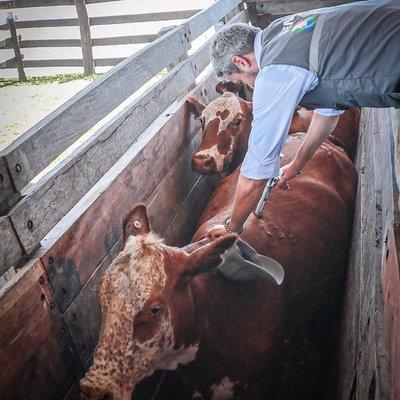 Gobierno ratifica aumentar mercados para la carne