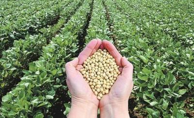 Cosecha de soja podría romper récord este año