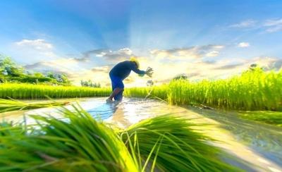 HOY / La exportación de arroz pegó un salto en la última década