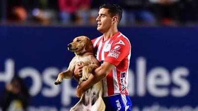 """""""Tunita"""", la perrita que ingresó a la cancha es el nuevo refuerzo del San Luis"""