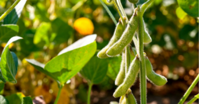 Reporte de Itaú señala que sector agrícola impulsará nuestra economía