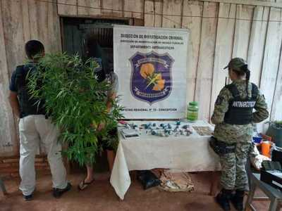 Horqueta: Detienen a un joven con plantas de marihuana y varias dosis de la droga