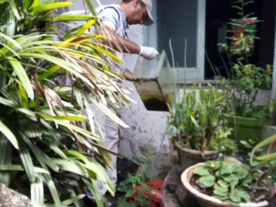 Dengue: Lamentan que campañas de prevención no impacten en la conciencia ciudadana