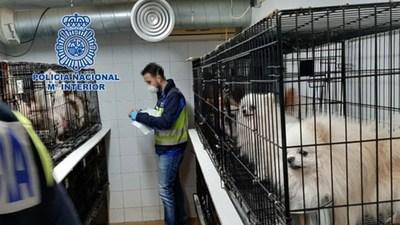 Rescatan de criaderos ilegales a 270 perros a los que les habían cortado sus cuerdas vocales para que no ladraran