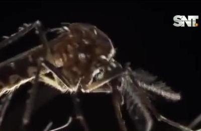 Alerta epidemiológica : Cuatro muertos por dengue