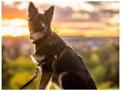 Perro con cara torcida, devuelto por su adoptante, encontró familia