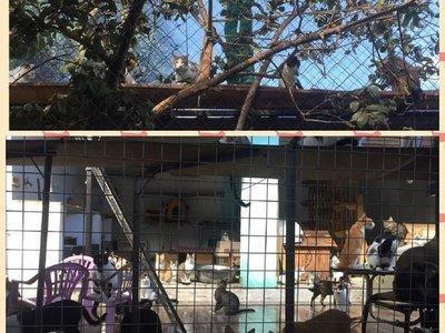 Refugio para gatos solicita ayuda de la ciudadanía