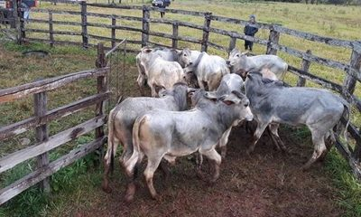 Tuit de la ONU enerva a ganaderos paraguayos