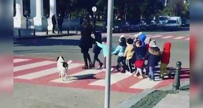 Perro callejero salta a la fama luego de ayudar a niños a cruzar la calle