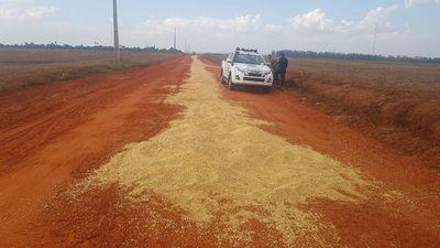 """""""Sin tierras"""" atacan y vacían camiones repletos de soja en Caaguazú"""
