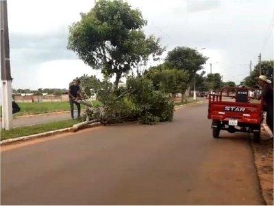 Repudian derribo de árboles en el centro de Ypejhú