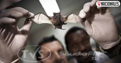 De dónde salió el coronavirus: las serpientes comen murciélagos, dice epidemiólogo